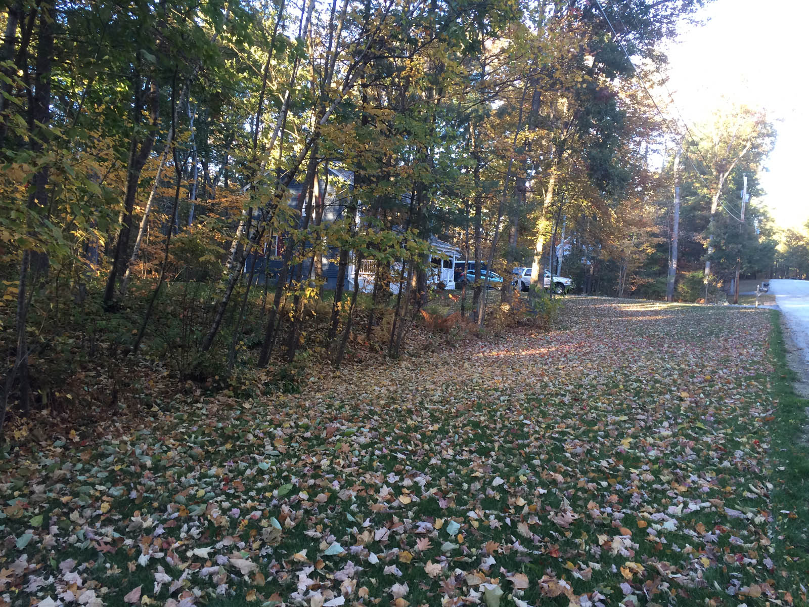 Oak Tree Leaves And Acorn Mulching Aroundtheyard Com Forums